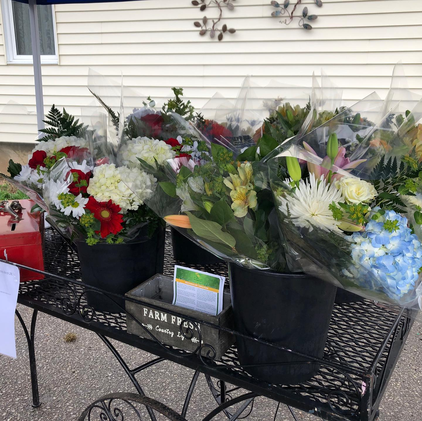 We All Need Floral Sunshine in Our Life – Assorted Bouquets $10 each at Van Noort Florists
