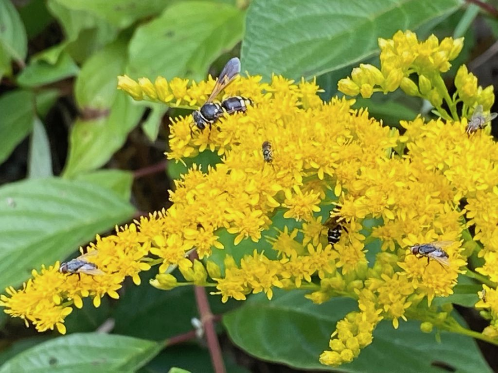 MEOPAR Project Blog: Fall Food for Pollinators