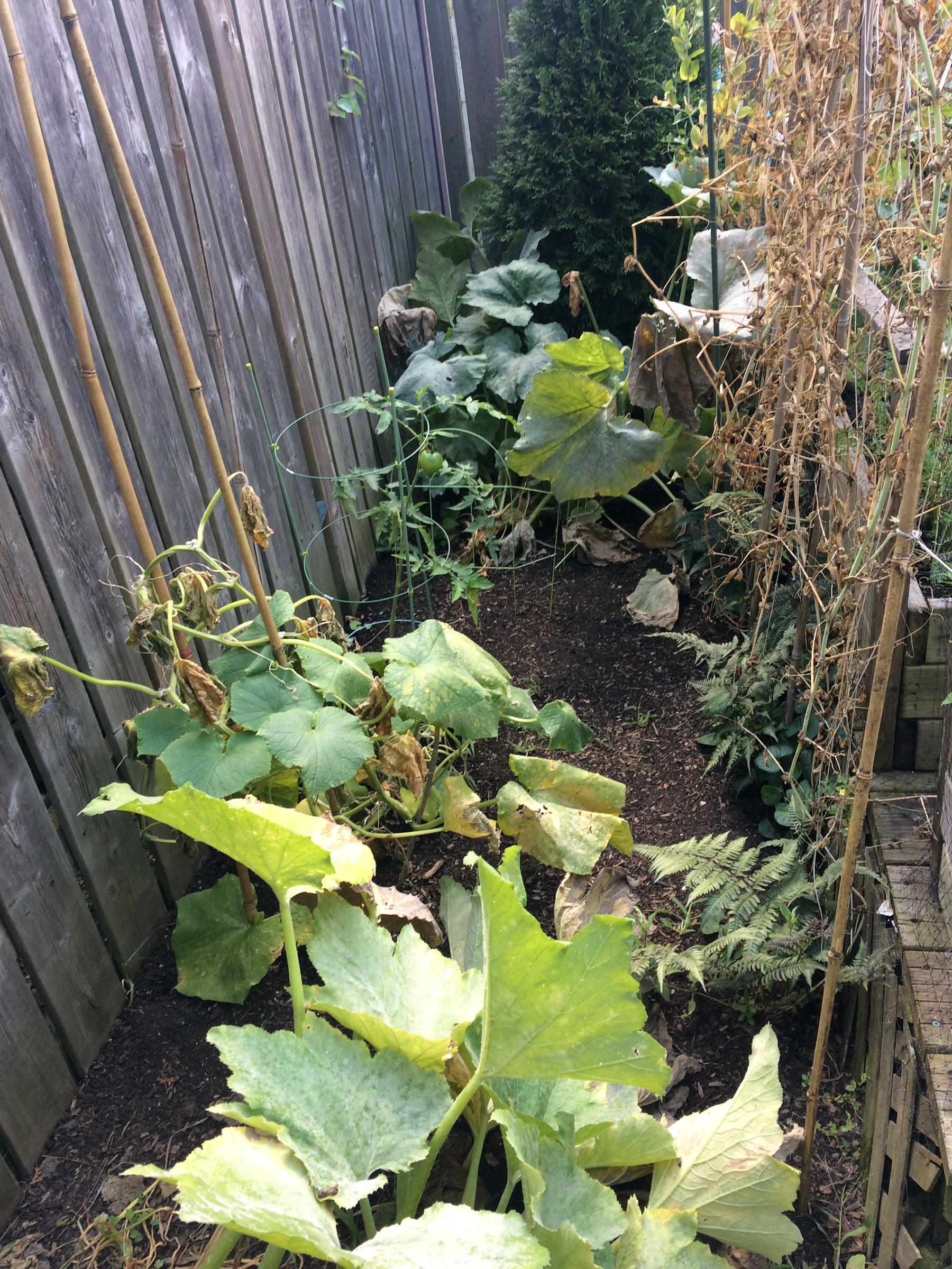 A Few Thoughts on Permaculture