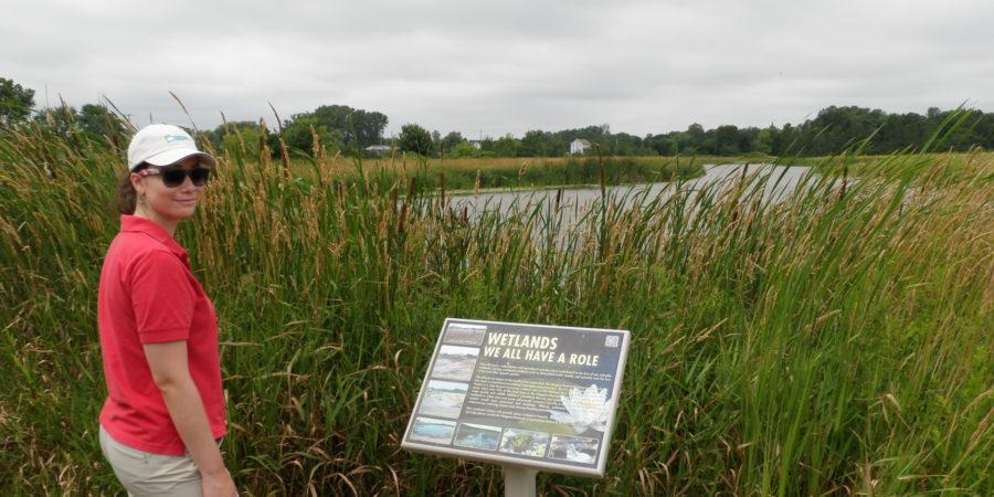 Wetlands: Our natural flood protection partner