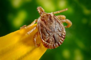 Protecting Against Ticks