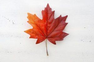 Happy Canada Day from Salon Allegra
