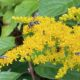 MEOPAR Project Blog: Fall Food for Pollinators