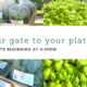Pelham Farmers Market Opens Thursday May 6 at 4PM!