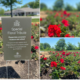 Special Floral Tribute: Arbor Plants Over 20,000 Flowers to Remember Lives Lost to COVID-19