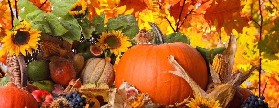 Happy Thanksgiving from Salon Allegra