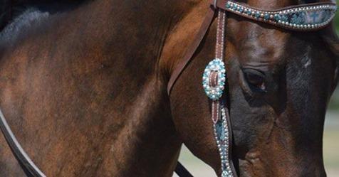 B'N'R Stables launches Virtual Horsemanship Program