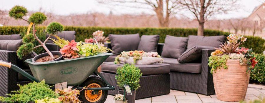 Maple Leaf Home Gardens Opens Online Plant Shop