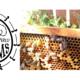 The Market @ The Village Vendor Profile: Bee Inspired Farm