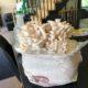New at Rumar Farm Online Store: Funky Funghi Mini Mushroom Farm Kit